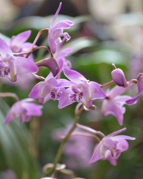 Pacific Orchid and Garden Exposition